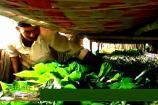 ಅನ್ನದಾತ: ರೇಷ್ಮೆ ಬೆಳೆಗೆ ಕಾಡುವ ಕೀಟಬಾಧೆ ಮತ್ತು ಅದರ ಪರಿಹಾರೋಪಾಯಗಳು