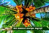 ಅನ್ನದಾತ: ತೆಂಗು ಬೆಳೆಗೆ ಬಾಧಿಸುವ ರೋಗಗಳ ನಿರ್ವಹಣೋಪಾಯಗಳ ಬಗೆಗಿನ ಮಾಹಿತಿ