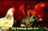 ಅನ್ನದಾತ: ಕೋಳಿ ಸಾಕಾಣಿಕೆಯ ಬಗೆಗಿನ ಮಾಹಿತಿ