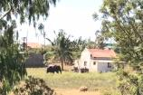 ಹಾಸನದ ಬಳಿ ದಾಳಿ ಮಾಡಿದ ಒಂಟಿ ಸಲಗ: ಕಂಗಾಲಾದ ರೈತ