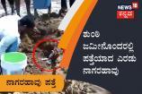 ಶುಂಠಿ ಜಮೀನೊಂದರಲ್ಲಿ 78ಮೊಟ್ಟೆಗಳೊಂದಿಗೆ ಪತ್ತೆಯಾದ ಎರಡು ನಾಗರಹಾವು