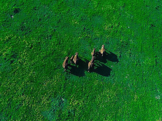 ಆನೆಯೊಂದು ಮನ್ನಾರನಲ್ಲಿ ತನ್ನ ಕುಟುಂಬದೊಂದಿಗೆ ಹೊಗುತ್ತಿರುವ ಅದ್ಬುತ ದೃಶ್ಯ ಡ್ರೋಣ್ ಕ್ಯಾಮರಾದಲ್ಲಿ ಸೇರೆಯಾಗಿದೆ