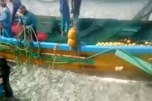 ಉಡುಪಿ: ಸಮುದ್ರ ತೀರದಲ್ಲಿ ಜನರ ಕಣ್ಮನ ಸೆಳೆದ ರಾಶಿ ರಾಶಿ ಮೀನು