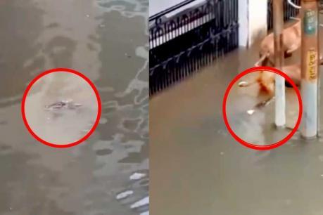 Viral Video: ವಡೋದರಾ ಪ್ರವಾಹದಲ್ಲಿ ತೇಲಿಬಂದ ಮೊಸಳೆ ಮಾಡಿದ್ದೇನು? ಇಲ್ಲಿದೆ ಶಾಕಿಂಗ್ ವಿಡಿಯೋ